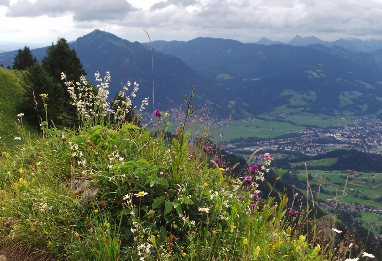 Auf den Bergwiesen im Allgäu gedeihen allerlei Kräuter