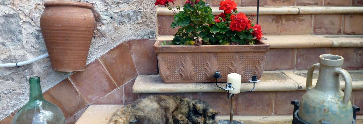 Mallorca für Entdecker