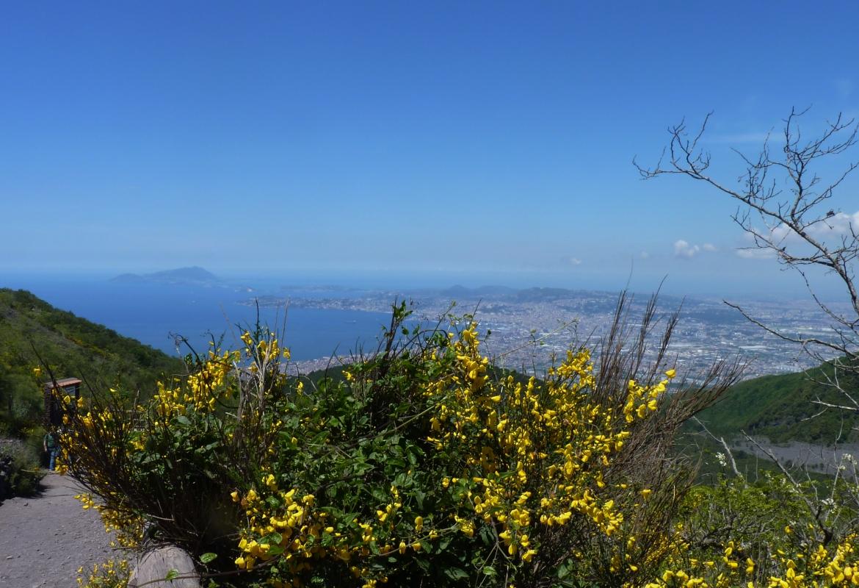 Über sonnengelben Ginster blickt man hier auf den Golf von Neapel .