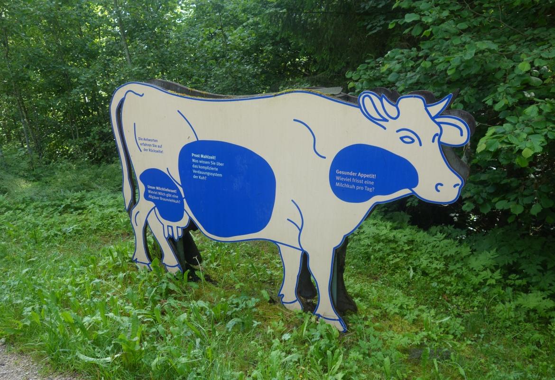 Keine Milka-Kuh, sondern eine Info-Kuh am Bergwiesenpfad.