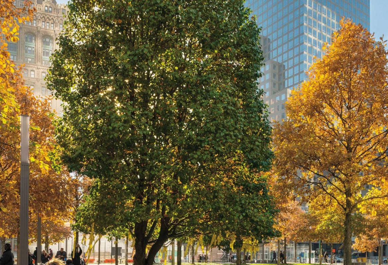 Der Überlebensbaum in New York.  (c) Len Jenshel, Diane Cook/Knesebeck Verlag