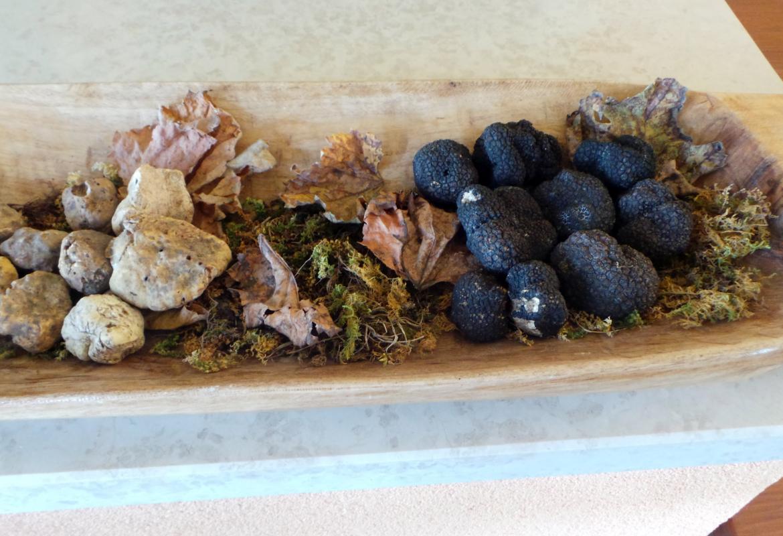 Es gibt viele Arten von Trüffeln: Die schmackhaftesten sind die weißen Trüffel.  Aber auch die schwarzen Herbsttrüffel haben ihre Liebhaber.