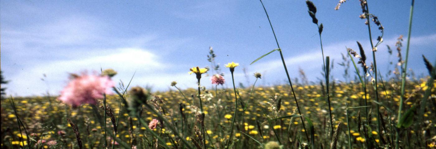 Corona Pandemie: Sommerurlaub in Sicht