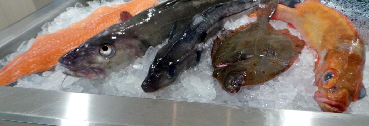Bremerhaven:  Hauptsache Fisch!